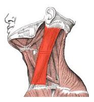 scalp melanoma sentinel node