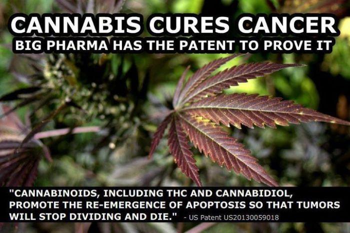 CannabisCuresCancerBigPharma